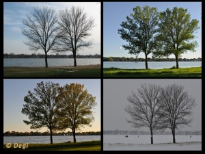 trees in four seasons 300x225 Selling A Home This Fall Or Winter? Take Your Photos Now.