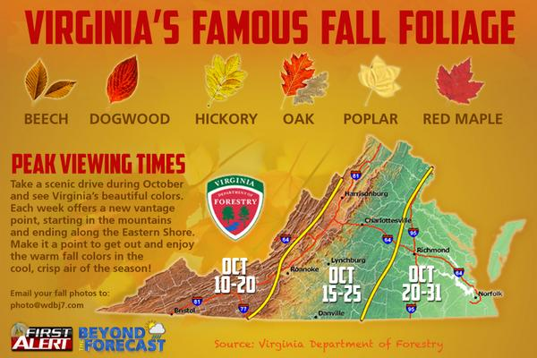 Fall Foliage in the New River Valley